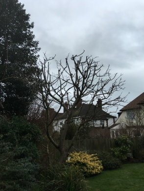 After Apple Tree Reduction